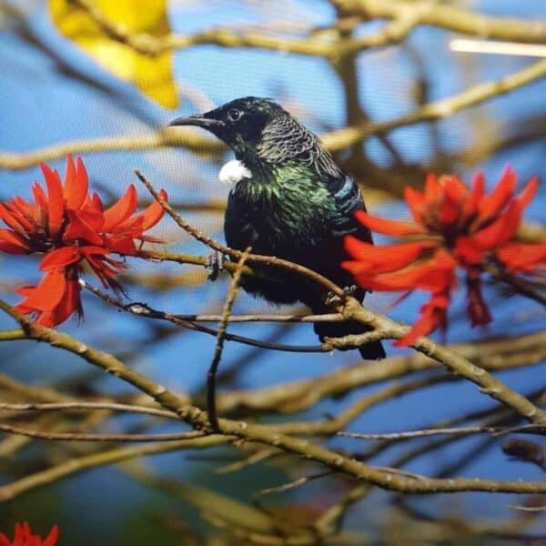 Tui, Russell Orongo Bay Holiday Park