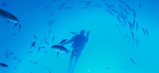 Diving, Bay of Islands